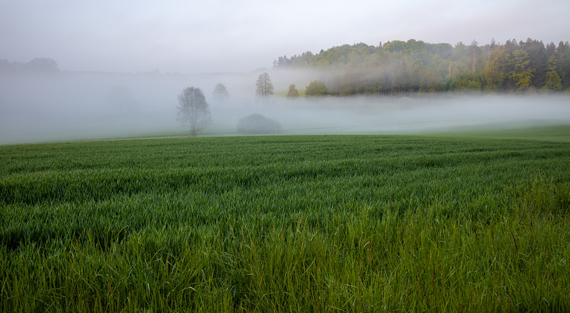 Nebel zwischen Hammel und Aystetten, Schwaben, Bayern, Deutschland