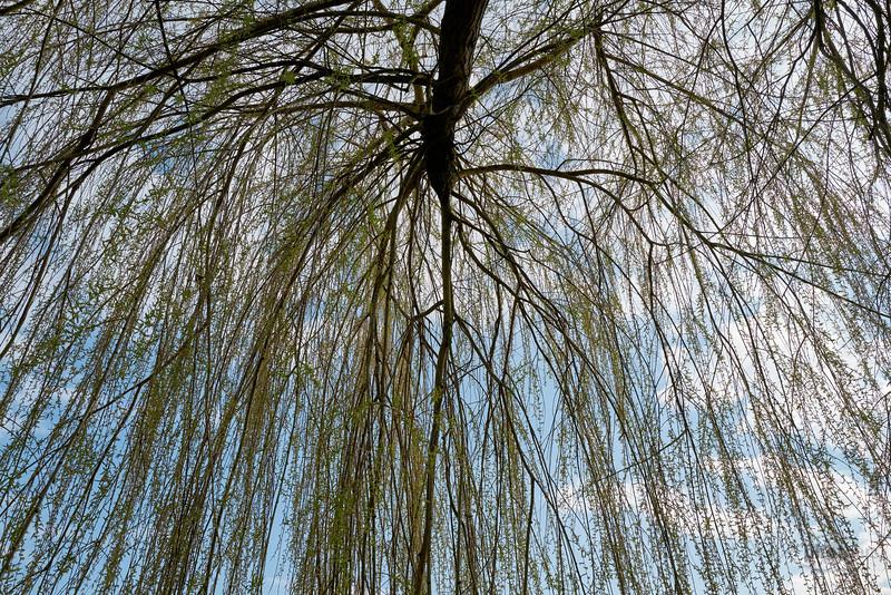 Weidenbaum an der Wörnitz, Donauwörth, Schwaben, Bayern, Deutschland