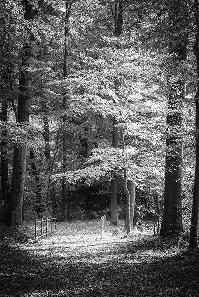 Herbst im Siebentischwald, Augsburg, Schwaben, Bayern, Deutschland