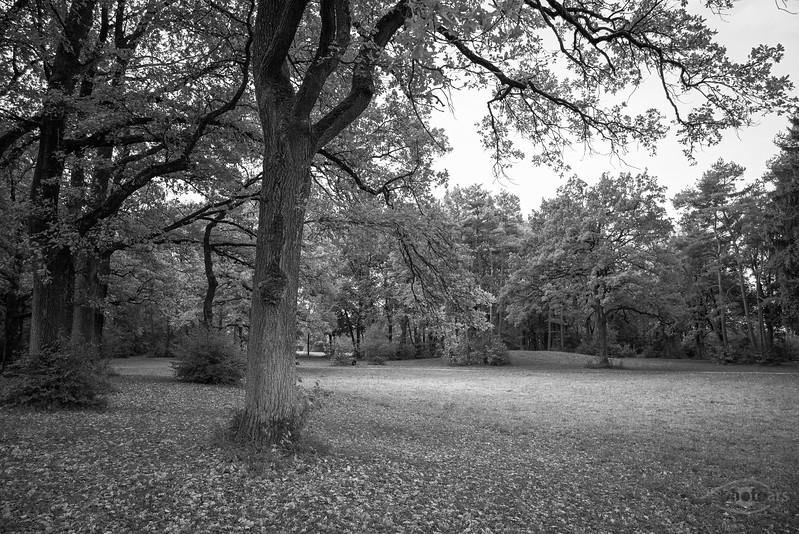 Siebentischwald im Herbst, Augsburg, Schwaben, Bayern, Deutschland