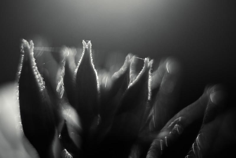 Blüten im Gegenlicht, Hochablass, Augsburg, Schwaben, Bayern, Deutschland