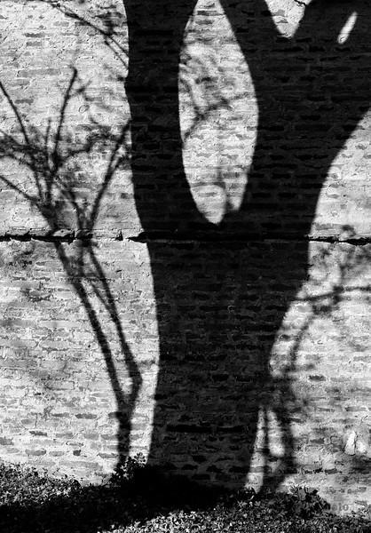Schatten eines Baumes an der Stadtmauer, Donauwörth, Schwaben, Bayern, Deutschland