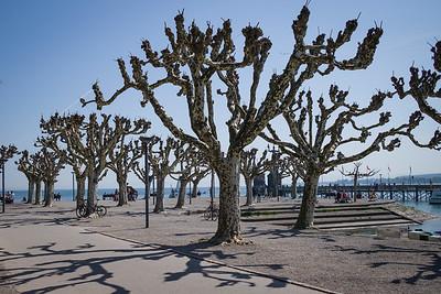 Konstanz, Stadtgarten, Park mit Bäumen