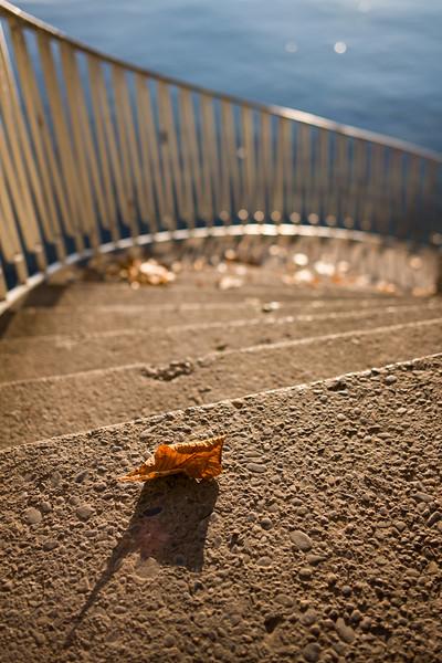 Herbstliches Blatt auf der Treppen zum Bodensee, Lindau, Schwaben, Bayern, Deutschland