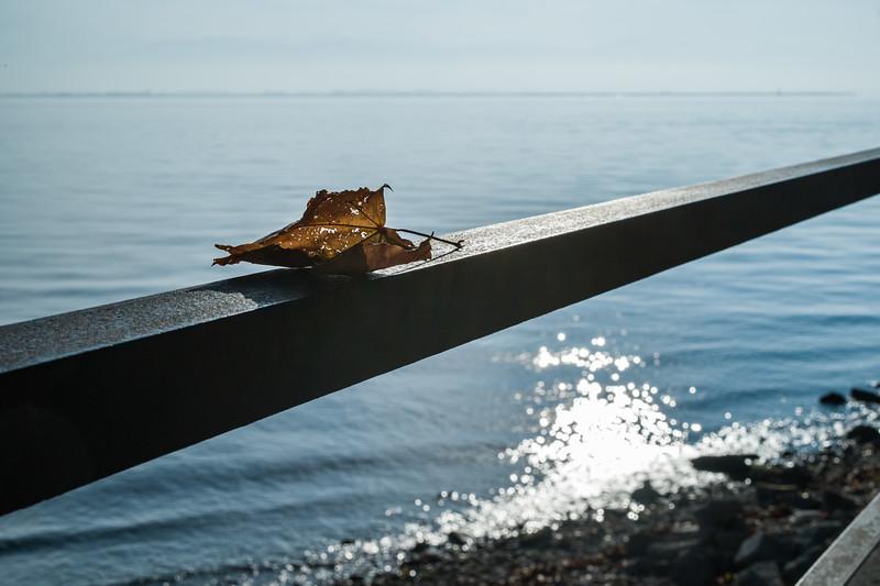 Herbstliches Blatt auf einem Geländer am Bodensee, Lindau, Schwaben, Bayern, Deutschland