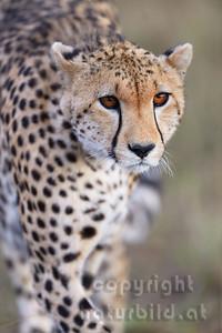 13-K02-03 - Gepard