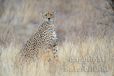 22-K12-02 - Gepard