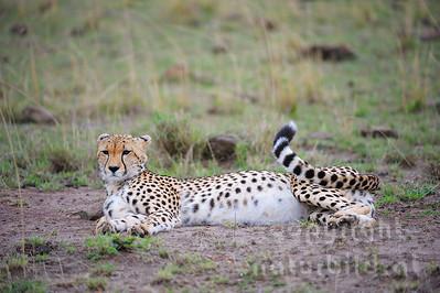 13-K02-09 - Gepard
