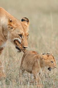 22-K15-38 - Löwin mit Jungem