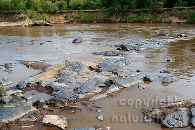 22-K40-55 - Mara River