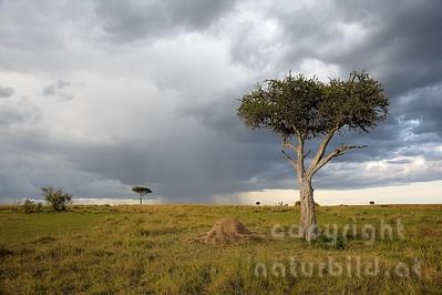 22-K40-61 - Regen über der Masai Mara
