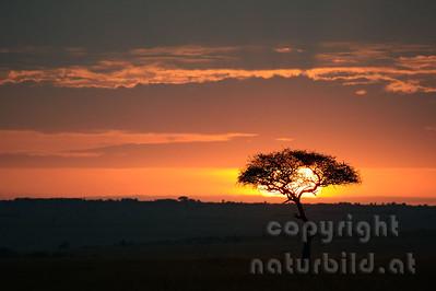 22-K40-44 - Sonnenaufgang in der Mara