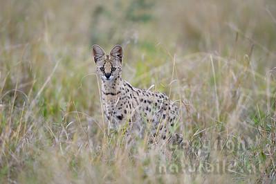 13-K10-02 - Serval