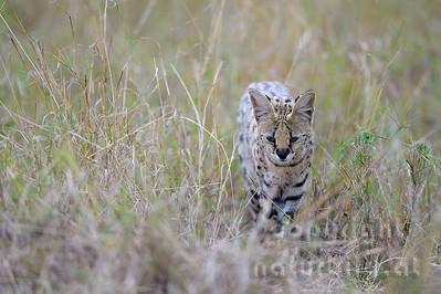 13-K10-03 - Serval