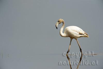 22-K22-03 - Rosa Flamingo