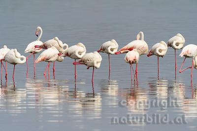 22-K22-10 - Rosa Flamingo