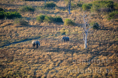 11-z09-07 - Afrikanischer Elefant
