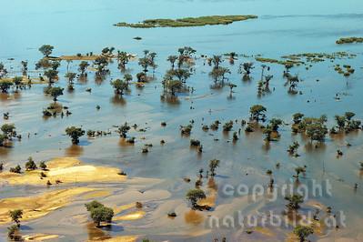 11-Z19-02 - Sambesi Fluss