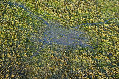 11-Z18-13 - Wasser im Busch