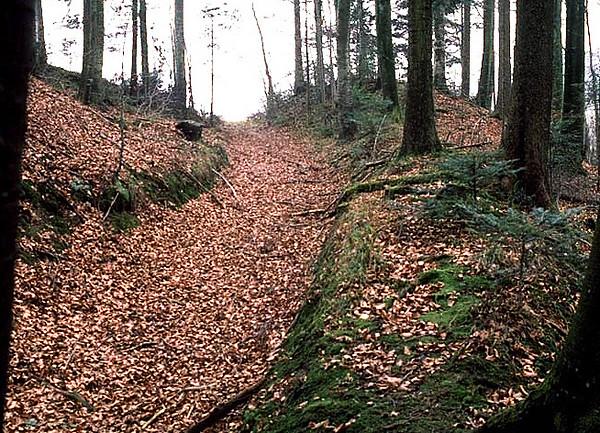 Dokument aus dem IVS (Inventar historischer Verkehrswege der Schweiz). Die alte Landstrasse beim Austritt aus dem Gruneckenwald (1994)