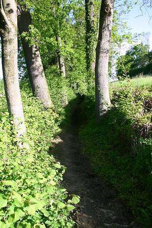 Der heutige Baumbestand ist nicht so alt wie Strasse, aber immer noch wegweisend.