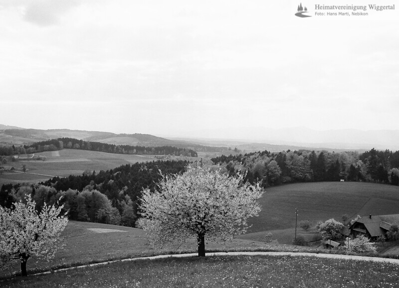 Landschaftsaufnahme Bäume