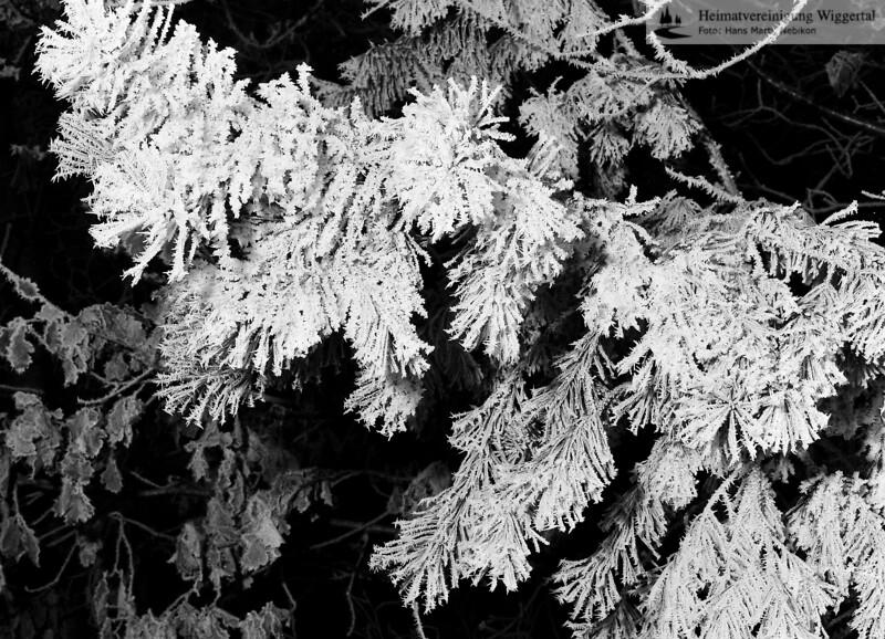 Winterreif an Ästen