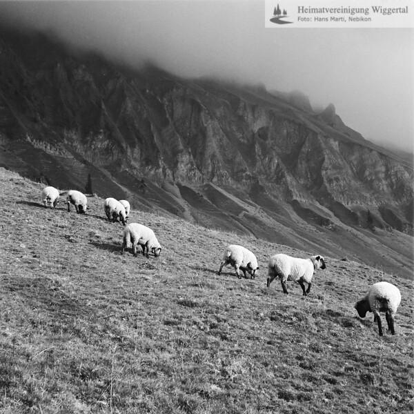 Entlebuch Landschaftsaufnahme mit Schafe