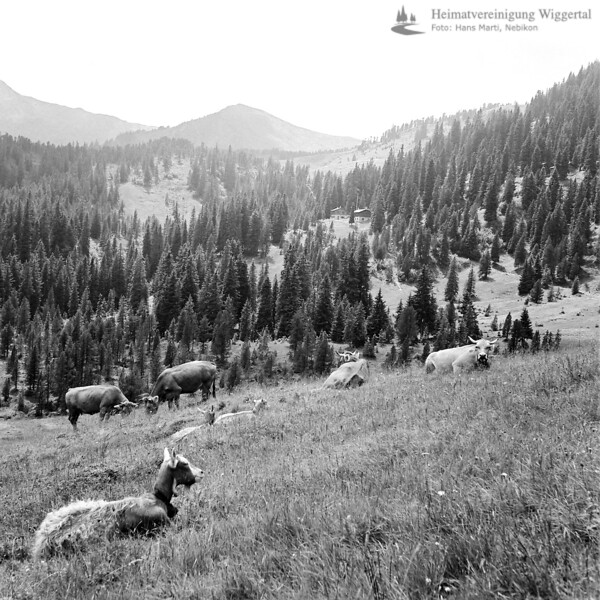 Entlebuch Landschaftsaufnahme mit Ziegen&Kühe