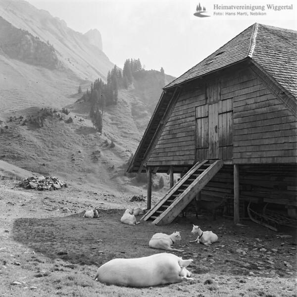 Entlebuch Haus mit Schwein und Ziegen