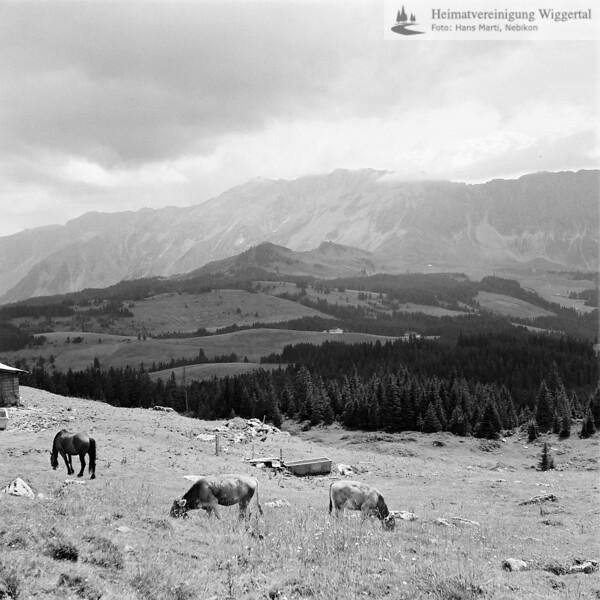 Entlebuch Landschaftsaufnahme mit Kühe&Pferd