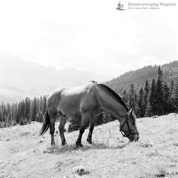 Entlebuch Lanschaftsaufnahme mit Pferd