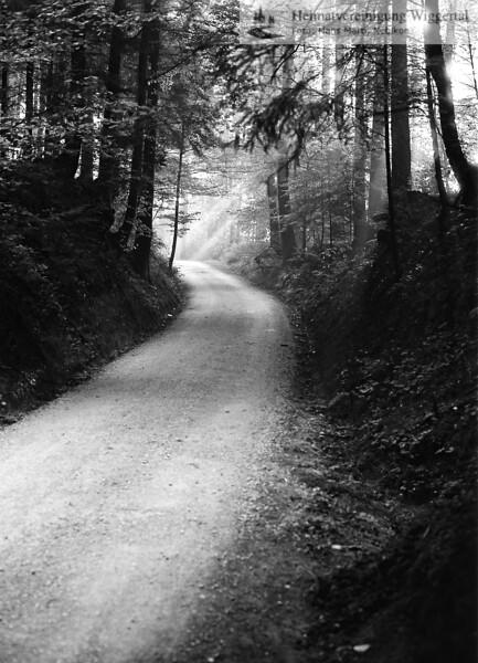 Nebikon/Egolzwil Waldweg 1986