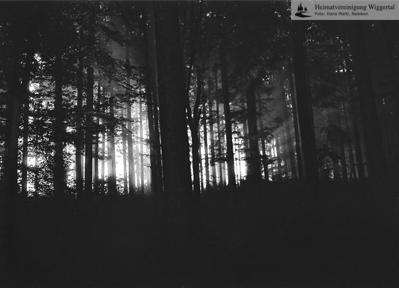 Nebikon/Egolzwil Waldaufnahmen 1986