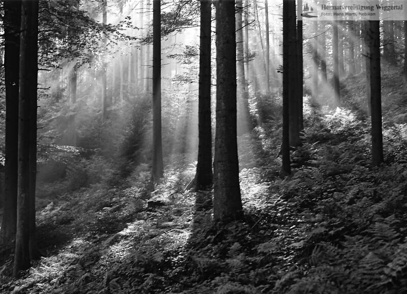 Nebikon/Egolzwil Waldaufnahme 1986