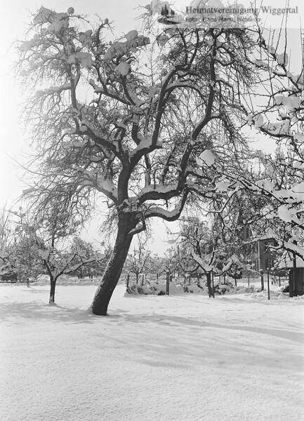 Nebikon Winterlandschaftsaufnahme 1976-1977