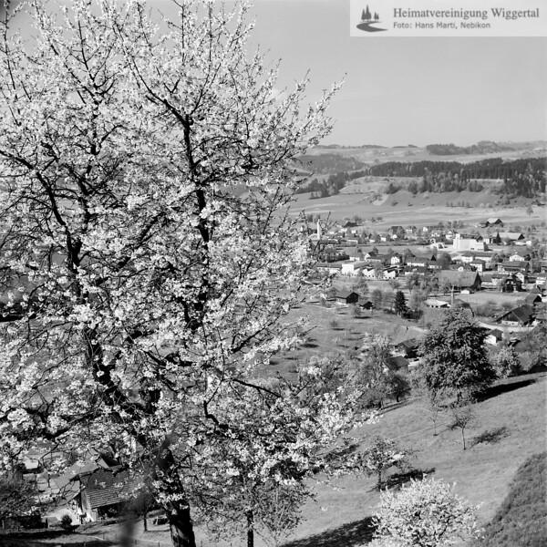Tessin Landschfaftsaufnahme mit Baum im Vordergrund 1969