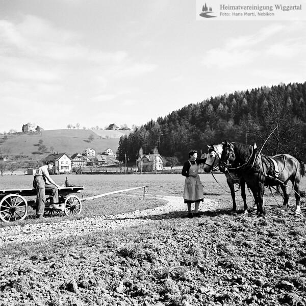 Bauer beim Pflügen mit Pferde