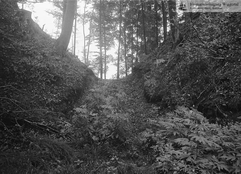 Wald Oktober 1988