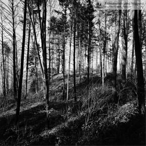 Hans Marti Album 015