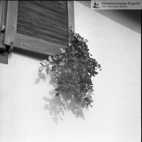 #030489 | Palmzweige am Fensterladen; fja