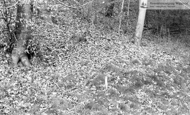 Graben Nebikon Naturschutzgebiet