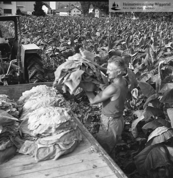 Handwerk/Gewerbebetriebe Tabak Bisang Adolf 1974