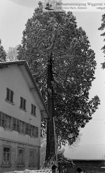 Reportagen Bäume fällen Winter 1985/86