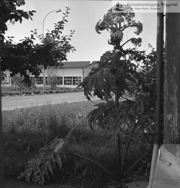Reportagen Grosswangen Schwegler Josef Juli 1984