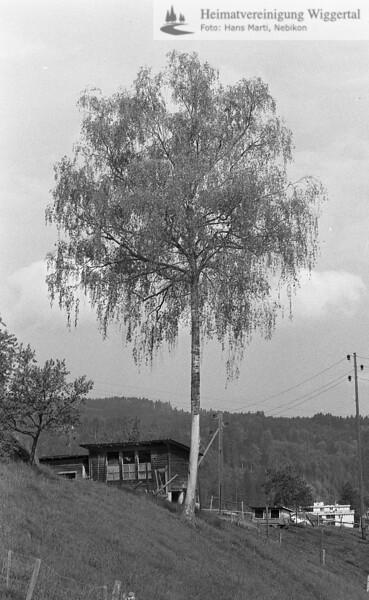 Reportagen Schötz Unterwellberg Frühjahr 1985 Blitz