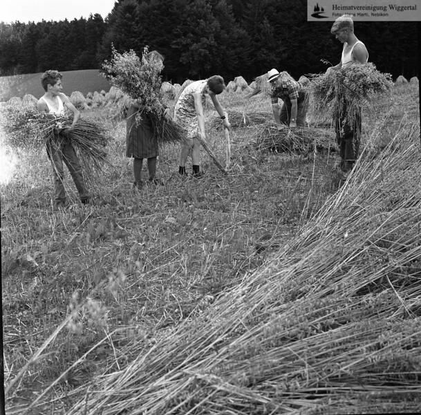 #150094 | Garbenbinden; Vorbereitung; fja