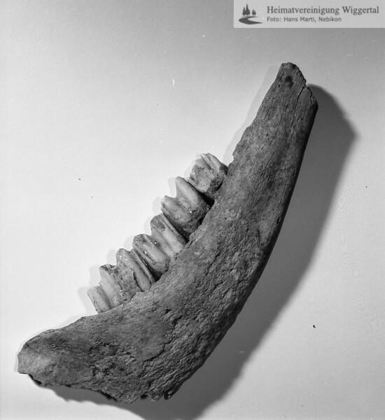 #160606 | Burgstelle Salbüel; Ausgrabung 1982; Fundobjekt: Tierknochen; fwk