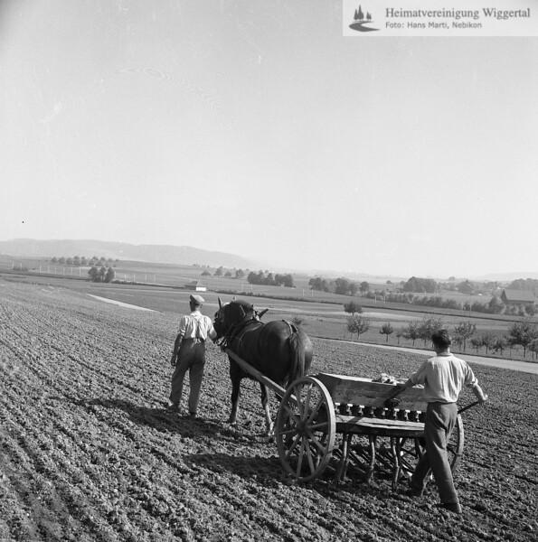 #170016 | Ackerbau; Ansaat mit dem Pferdezug; wo?