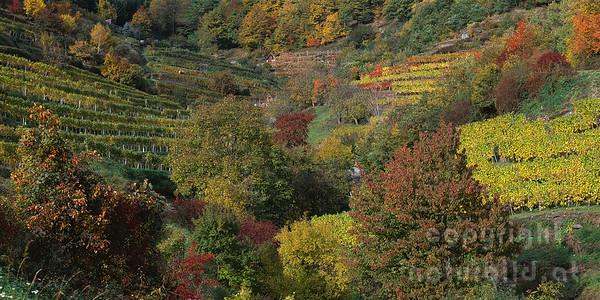 PF-714 - Farbenpracht im Weingarten